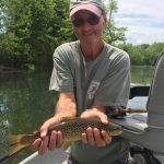 S. Holston brown trout