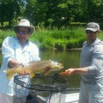 South Holston brown trout